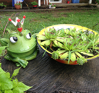Container Gardening, one of many activities at Mooresburg Community Center